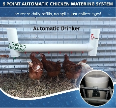 Automatic Chicken Drinker Waterer with 6 drinking points
